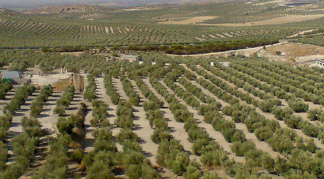 Citoliva promueve el uso de soluciones ERP en las empresas andaluzas del sector oleícola